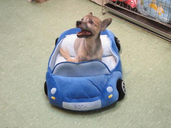新買的ㄅㄨㄅㄨ車