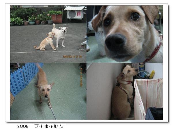 2006 可小米.JPG