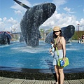 海生館的大白鯨