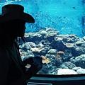 珊瑚館剪影