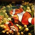 偷親小丑魚