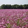 春暖花開代表拍