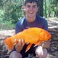 monster-goldfish.jpg