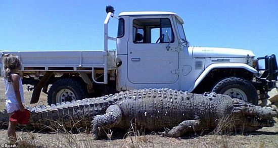 monster-crocodile.jpg