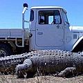 monster-crocodile.jpg