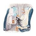 20160917坐飛機的海鷗.jpg