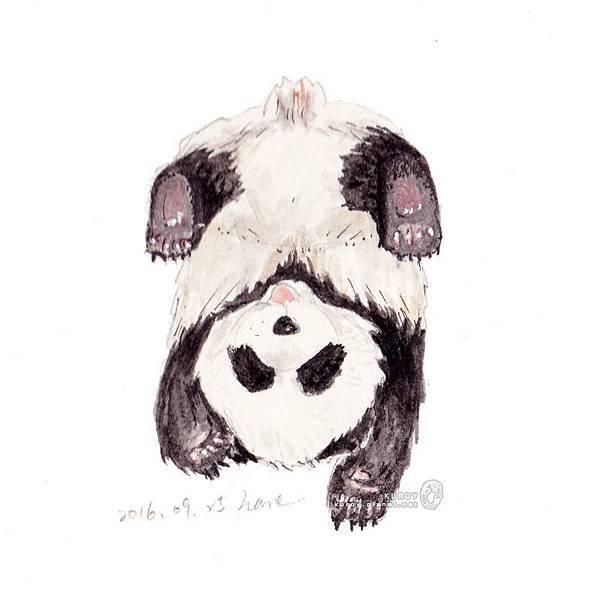 20160925奇怪睡姿的熊貓.jpg