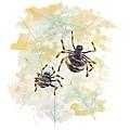 20161109給孩子織有趣圖樣蜘蛛網的蜘蛛.jpg