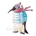 20161203寒風中穿著厚重冬衣的企鵝.jpg