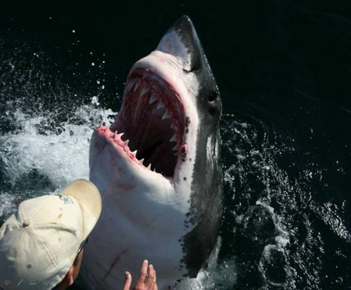 【照片】大白鯊的感恩-05.jpg