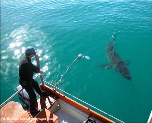 【照片】大白鯊的感恩-06.jpg