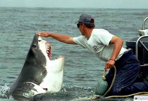 【照片】大白鯊的感恩-07.jpg