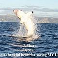 【照片】大白鯊的感恩-08.jpg