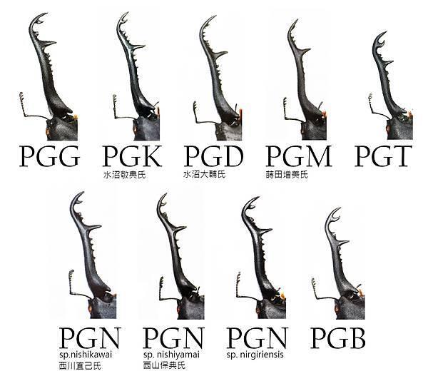 PGseries.jpg