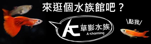 ac草影.jpg