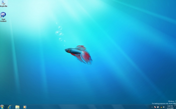 beta_fish_610x380.jpg
