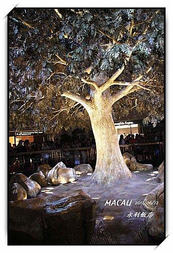 澳門永利酒店--吉祥樹--表演湖--富貴龍