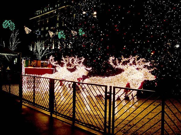 聖誕樹1.jpg
