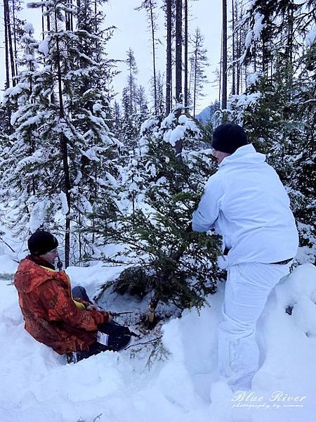christmas-tree06.jpg