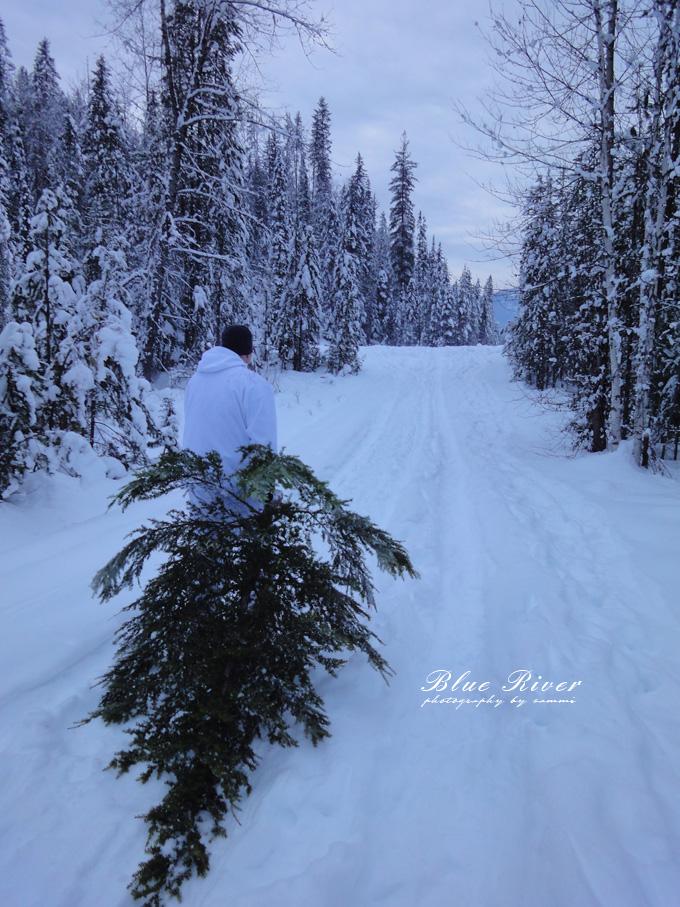 christmas-tree08.jpg