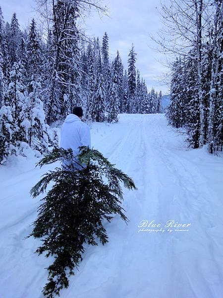christmas-tree09.jpg