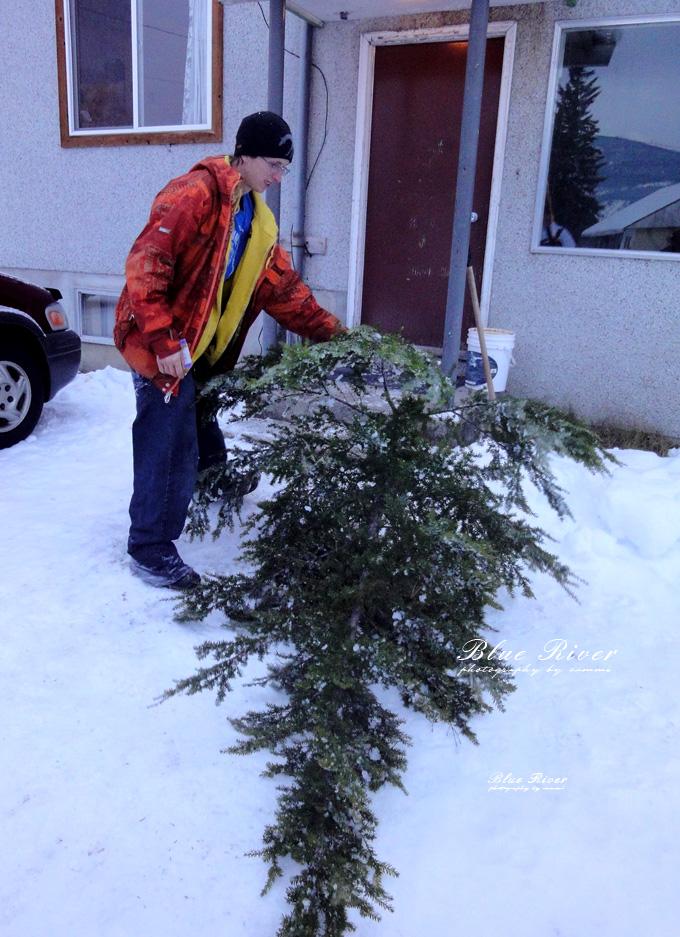 christmas-tree12.jpg
