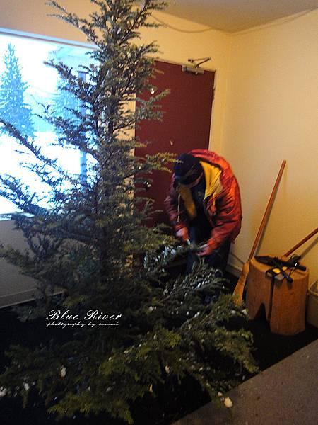 christmas-tree13.jpg