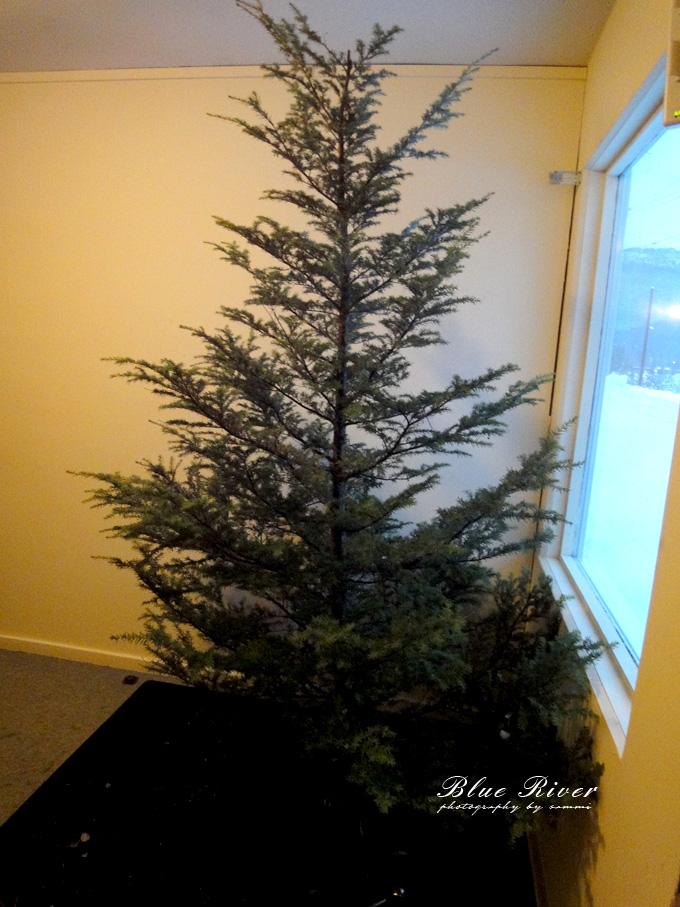 christmas-tree14.jpg