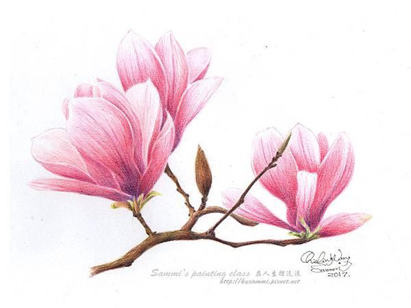 木蘭花.jpg