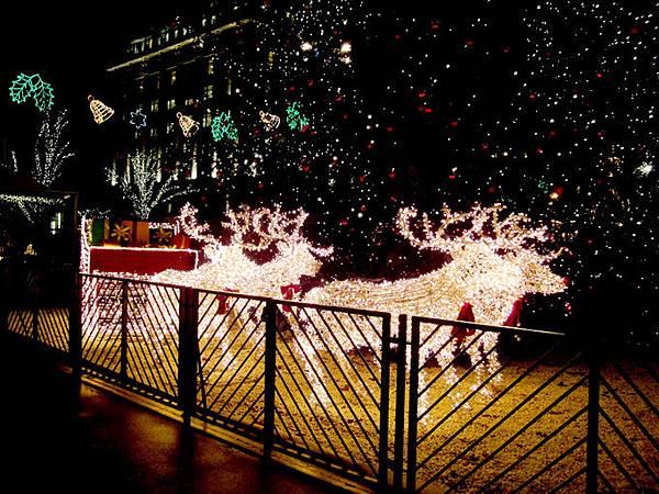 1聖誕樹1.jpg