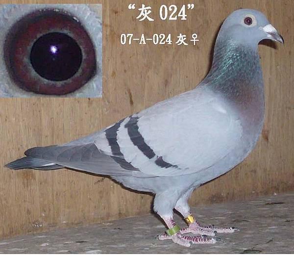 A-024-5.jpg