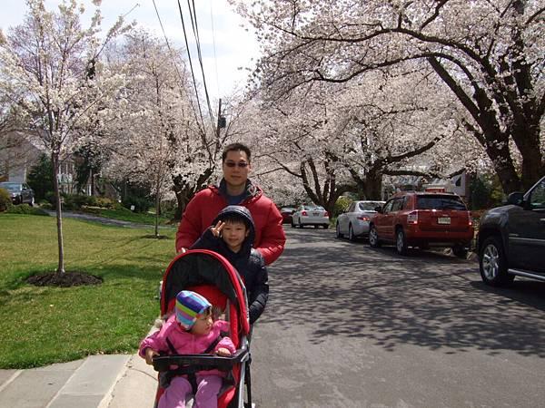 Kenwood社區櫻花節 1