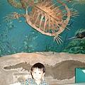 大海龜骨架