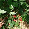 隨便翻就一堆草莓