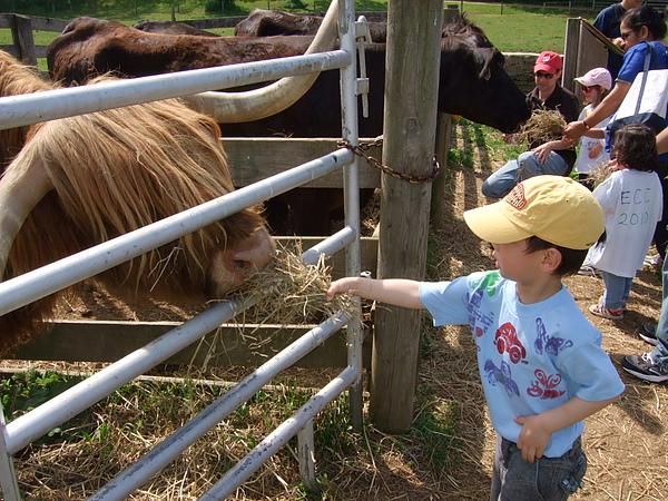 餵牛中。。。