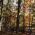 行車中一旁的樹林