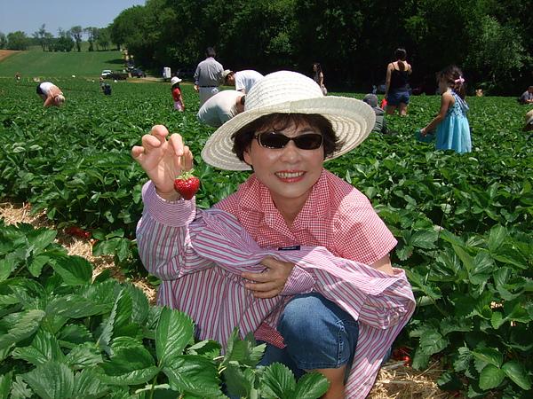 阿媽採的草莓大又美