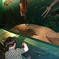 海龜和鱷魚