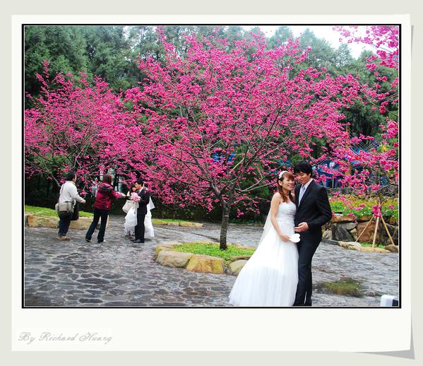 2012 九族櫻花婚禮