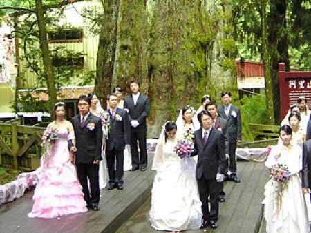 阿里山神木婚禮