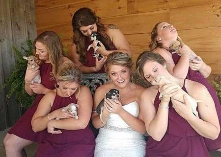 婚禮 流浪狗
