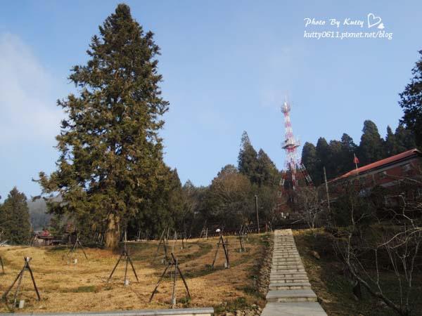 2014-1-31~2-1阿里山日出 (19).jpg