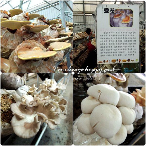 2014-8-24百菇莊 (14).jpg