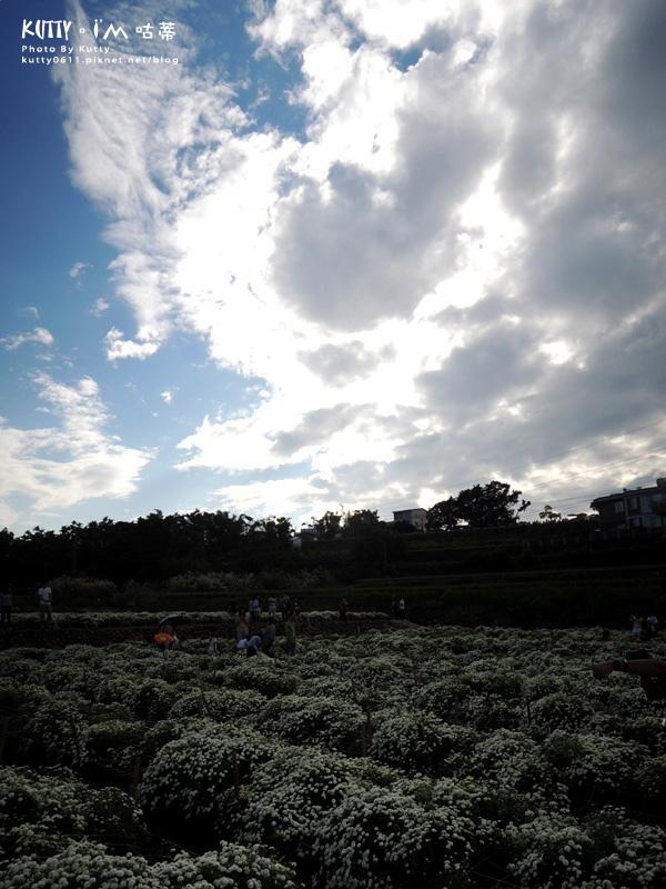 2015-11-15苗栗銅鑼杭菊 (22).jpg