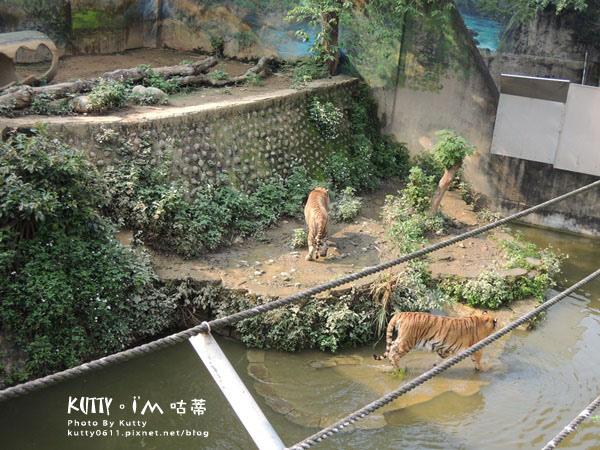 2016-5-2動物園 (12).jpg