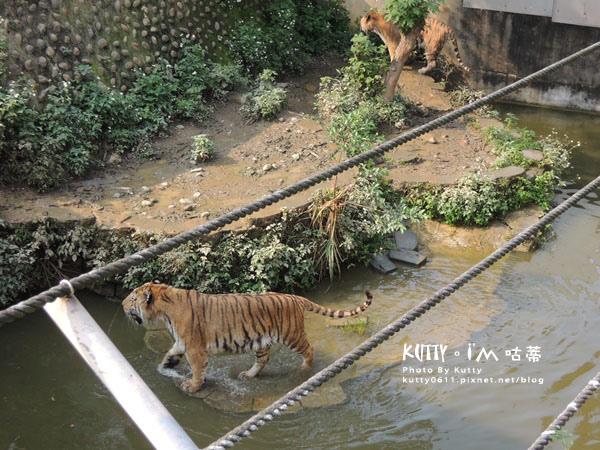 2016-5-2動物園 (13).jpg