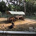 2016-5-2動物園 (16).jpg