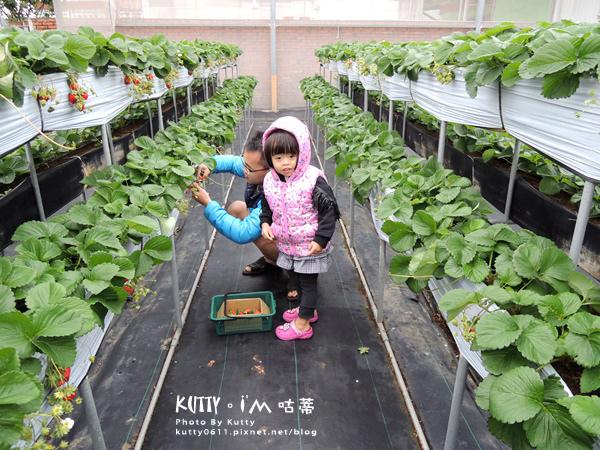 2017-12-18親親農場採草莓 (1).jpg
