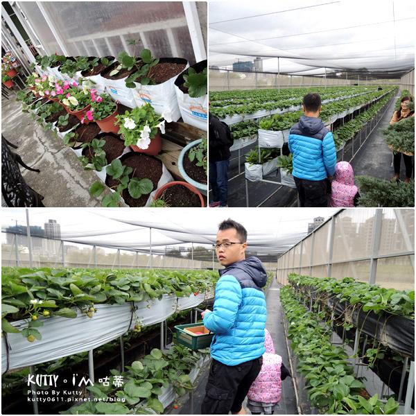 2017-12-18親親農場採草莓 (3).jpg