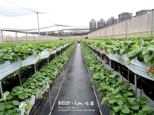2017-12-18親親農場採草莓 (4).jpg